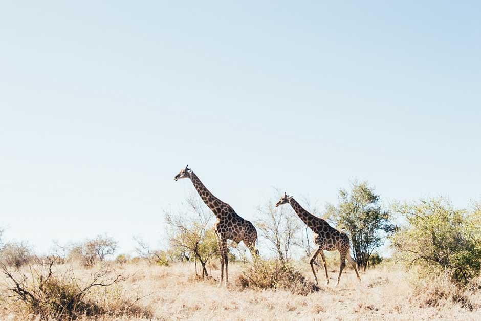 Honeymoon Goals Safari